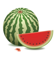 watermelon and a slice vector image