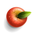 Red ripe apple isolated vector image