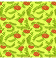 Rowan berry floral botany seamless pattern vector image