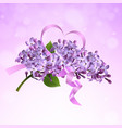 lilac branch with a pink satin ribbon vector image