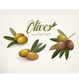 Set of olive branches with stems and leaves vector image