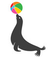 seal animal vector image