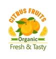 Orange citrus fruits icon Organic fresh tasty vector image