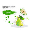 pear hand drawn watercolor fruit on white vector image