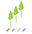 wheat plants flat icon vector image