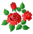 flowers roses vector image