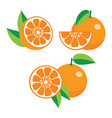 collection of different oranges vector image
