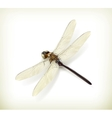 Dragonfly realistic vector image