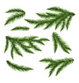 pine tree branches isolated on white vector image