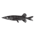 pickerel Esox engraving vector image
