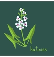 Katniss plant vector image vector image