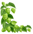 Hops vector image vector image