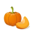 Pumpkin isolated on white vector image