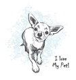 Funny smooth-haired chihuahua vector image