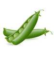 peas object vector image
