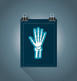 flat radiography icon vector image