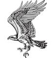 Wild Predatory Bird vector image