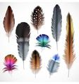 Realistic Feathers Set vector image