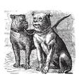 Bulldog vintage engraving vector image vector image