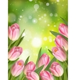 Pink colored tulips EPS 10 vector image