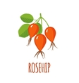 Rosehip icon in flat style on white background vector image