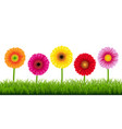 gerbers and grass border vector image