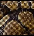 mosaic snake skin vector image