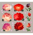 Set of flower elements isolated vector image