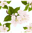 seamless texture apple blossom twigs with leaves vector image