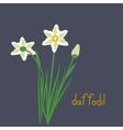 Daffodil plant iilustration vector image