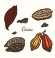 set of colored cocoa vector image