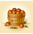 Retro bucket of tomatoes vector image