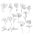 sketch of flowers vector image