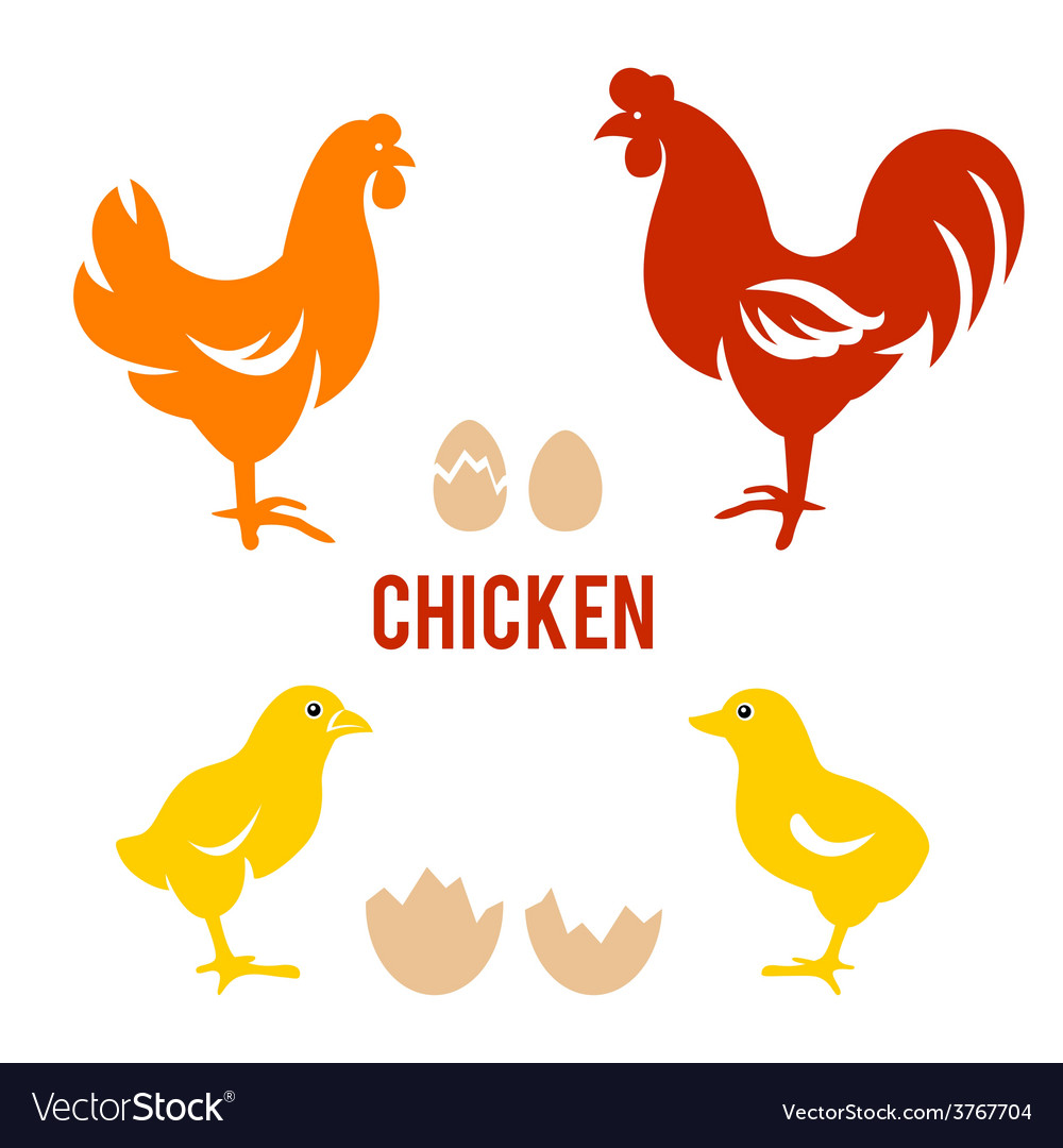 Chicken and egg set in vector