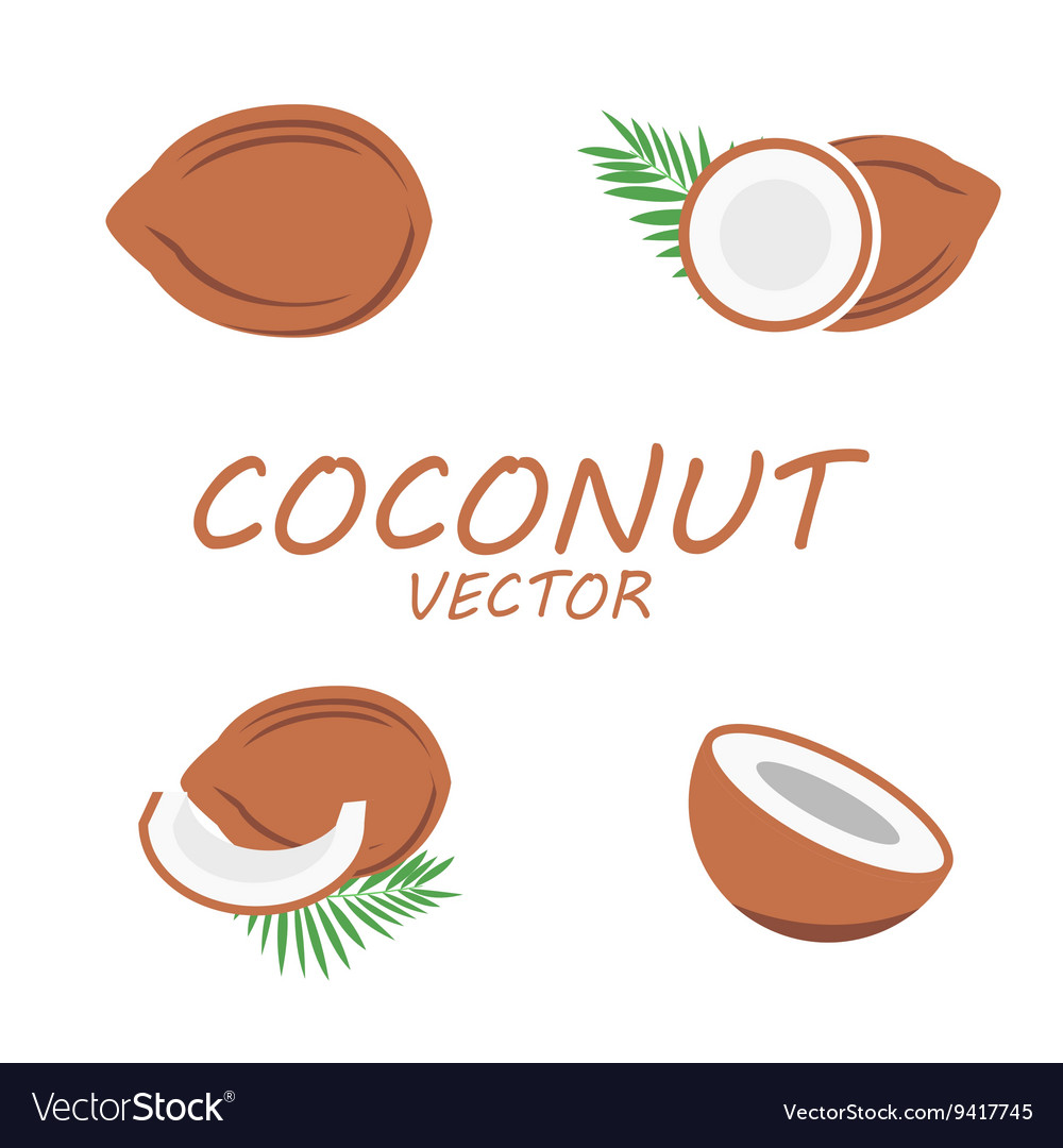 Flat coconut icons set vector