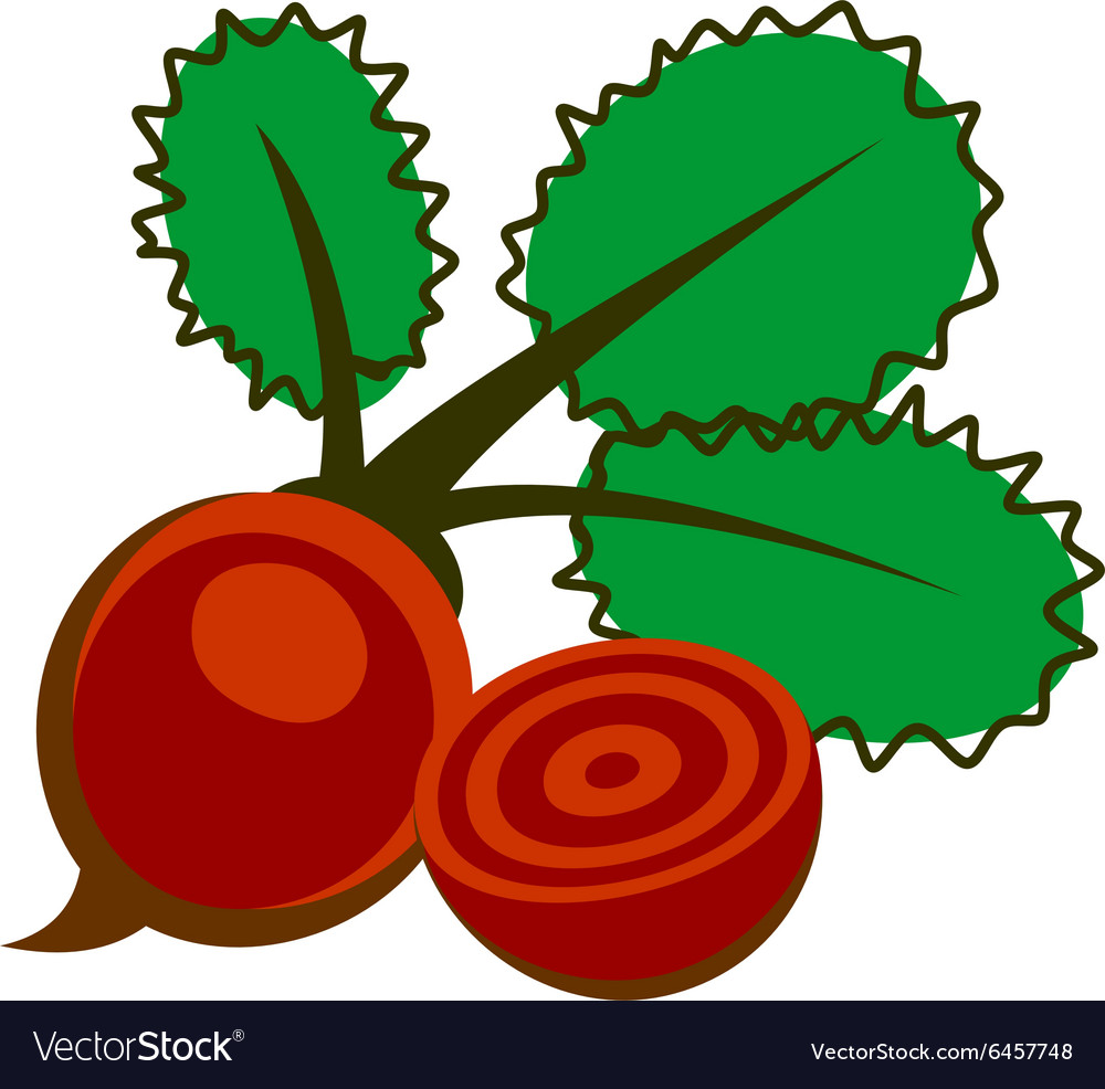 Beet isolated over white background vector
