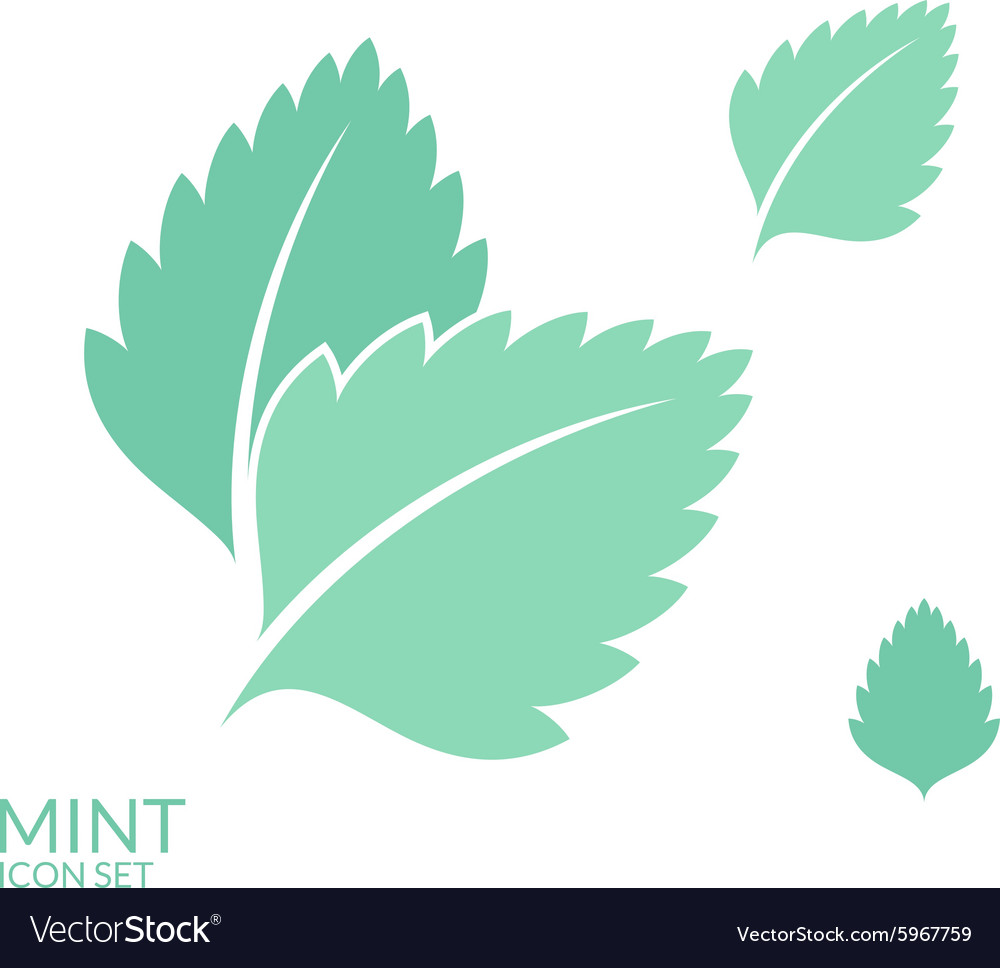 Mint icon set isolated leaves on white vector