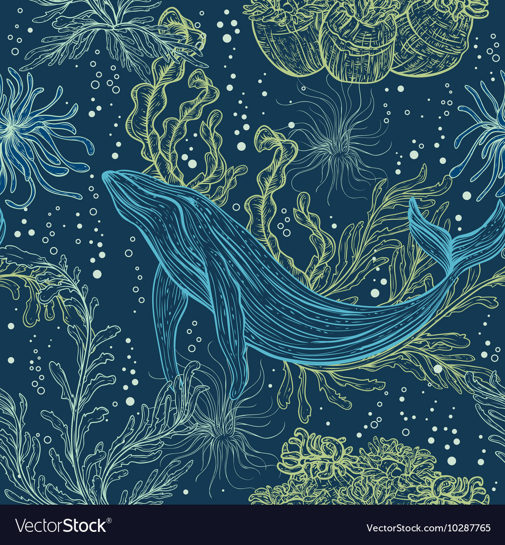 Whale marine plants and seaweeds vector