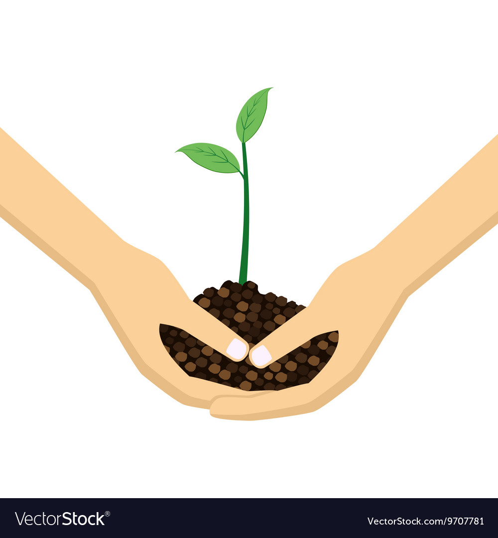 Two hands holding young plant vector
