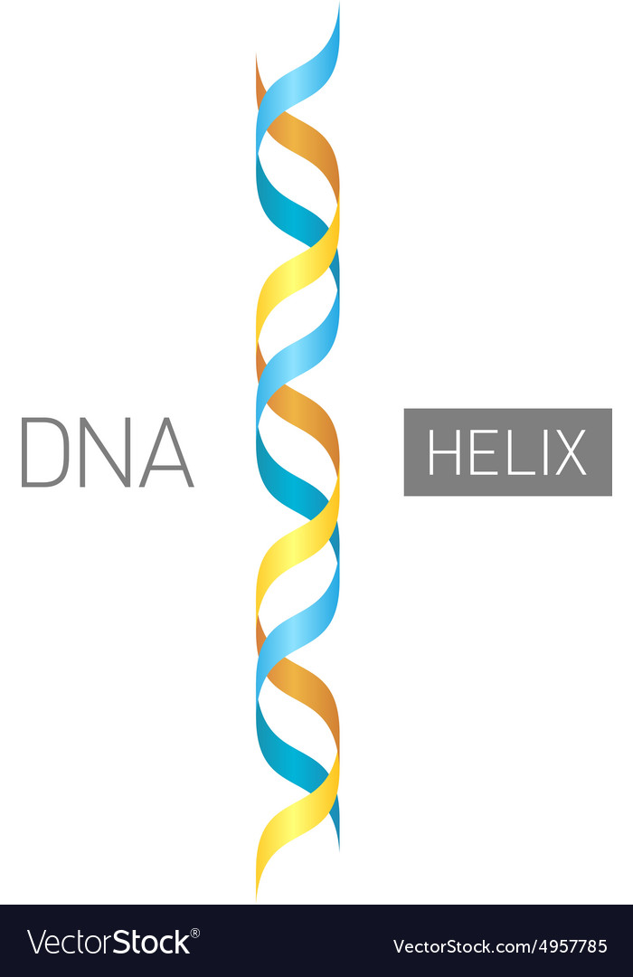 Dna logo vector