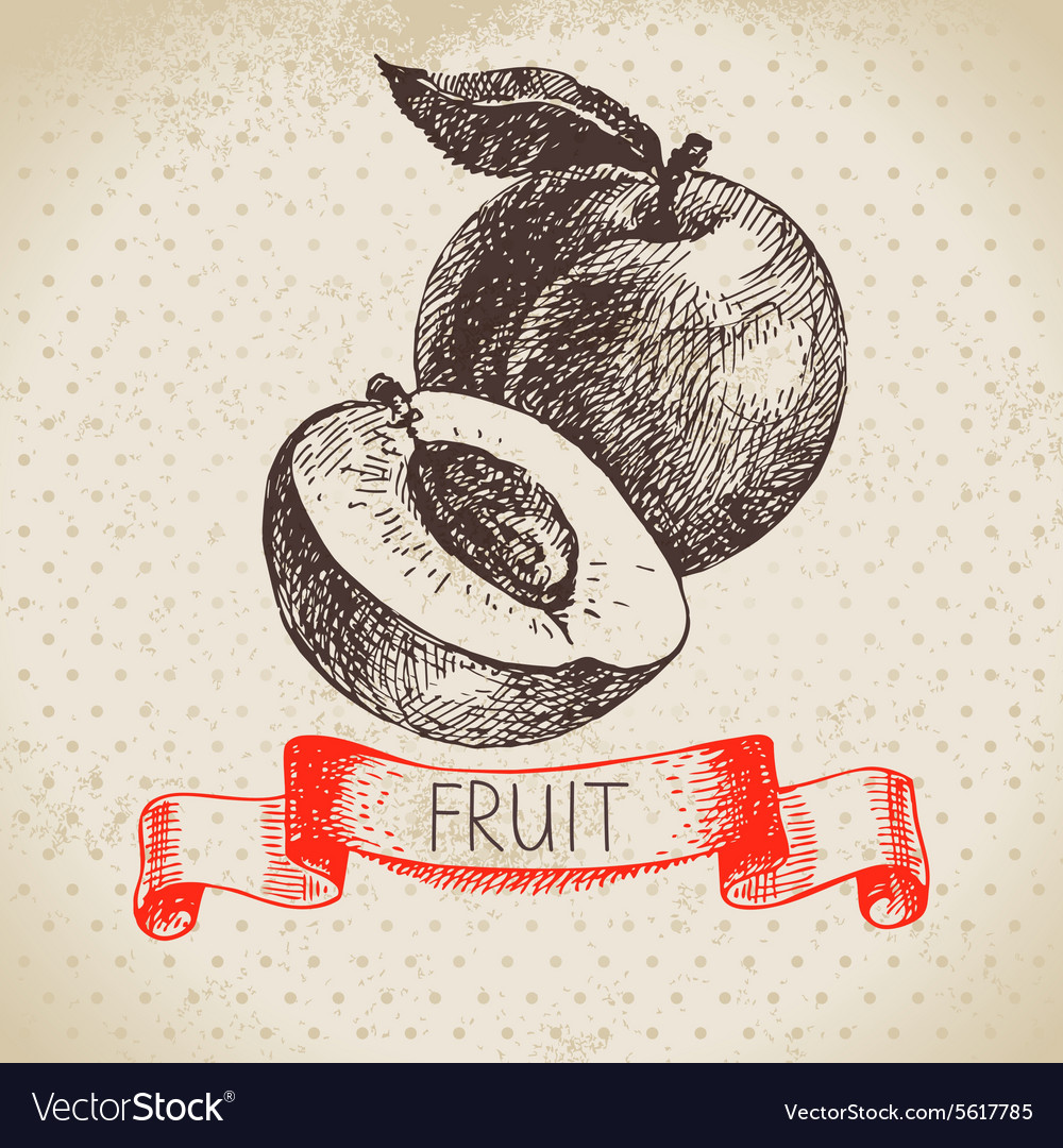 Hand drawn sketch fruit peach eco food background vector