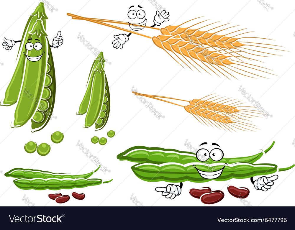 Wheat ears fresh pea and bean vegetables vector