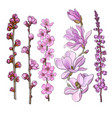 hand drawn pink flowers - magnolia apple and vector image