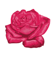 beautiful red rose with the effect of a watercolor vector image vector image