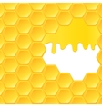 Honeycomb and flowing honey vector image