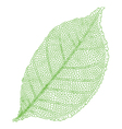 green vein leaf vector image