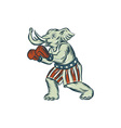 Republican Elephant Boxer Mascot Isolated Etching vector image