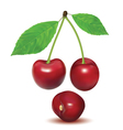 Ripe red berries cherry with leaves vector image