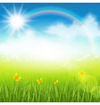summer meadow with grass vector image