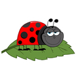 Happy Cartoon Ladybug On A Leaf vector image vector image